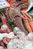 Sea food and ice cubes Stock Images