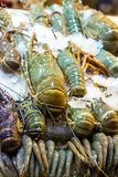 Sea food in ice large lobster royal prawns close-up asian market street many seafood delicacies thailand vietnam royalty free stock photography