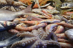 Sea Food Market of Cyprus Stock Photography