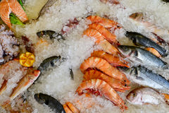 Sea food market Royalty Free Stock Images