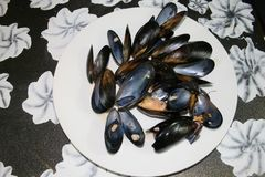 Sea food plate on a tabel stock photos