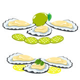 Sea food, shells of oysters, lemon and lime pieces Royalty Free Stock Image