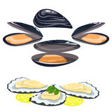 Sea food, shells of oysters mussels lemon and lime pieces Royalty Free Stock Photo