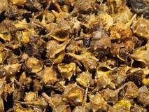 Sea food, snails named rapana venosa stock photos