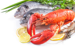 Sea food on white background Royalty Free Stock Images