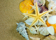 Sea frame with starfishes. Sea frame with some shell and starfishes stock images