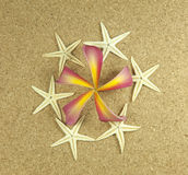 Sea frame with starfishes Stock Image