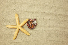 Sea frame with starfishes. Sea frame with some starfishes and shell stock photography