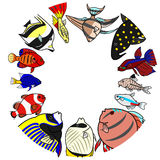 Sea and freshwater tropical fishes in circle Royalty Free Stock Photo