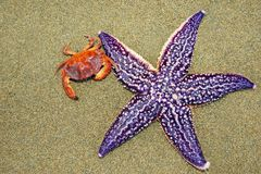 Sea friendship stock photography