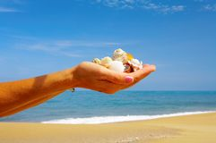 Sea gifts. View of humans palms filled with some shells royalty free stock images