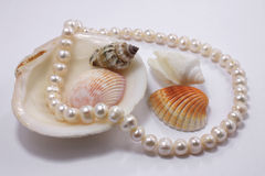 Sea gifts. Cockleshells of mollusks and a necklace on a white surface Stock Photos