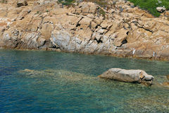 Sea of Giglio island - Campese - Italy stock photo