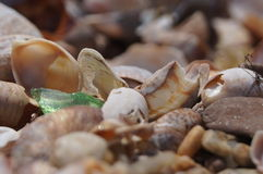 Sea glass and Sea shells Royalty Free Stock Image