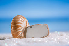 Sea glass seaglass with shell on glitter sand with ocean. Beach and seascape, shallow dof Royalty Free Stock Images