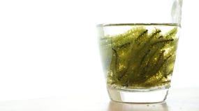 Sea grape seaweed, uni budou. japanese ocean seaweed food. great Royalty Free Stock Photos