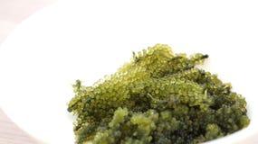 Sea grape seaweed, uni budou. japanese seaweed Stock Images