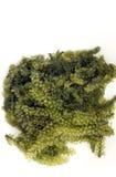 Sea grape seaweed, uni budou. japanese seaweed Royalty Free Stock Photo