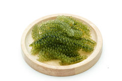Sea grapes  green caviar  seaweed Stock Image