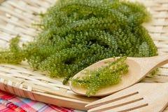 Sea grapes ( green caviar ) seaweed Royalty Free Stock Images