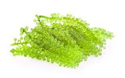 Sea grapes green caviar seaweed on white background. Sea grapes green caviar seaweed on white royalty free stock photo