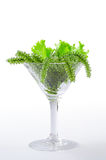Sea grapes seaweed in cocktail glass. Green Caviar, on White Bac Royalty Free Stock Images