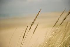 Free Sea Grass Royalty Free Stock Images - 14495099