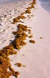 Sea grass. Royalty Free Stock Images