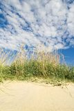 Sea grass Stock Photos