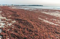 Abnormal Red Tide on Hampton Beach Stock Photography