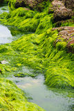 Sea grass Stock Images