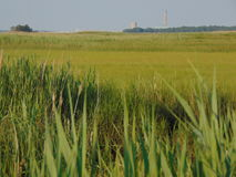 Sea of Grass. Buildings in distance royalty free stock photography