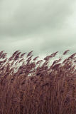 Sea Grass on Dismal Sky Stock Images