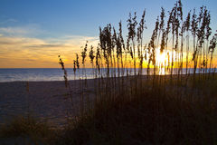 Sea Grass on the Dunes at Sunset Royalty Free Stock Images