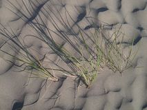Sea Grass Stock Photography