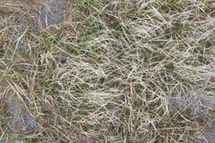 Sea grass, green water vegetation. Pattern stock photos