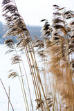 Sea grass by the lake. Segrass by the lake and straw Stock Images