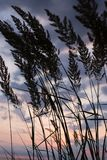 Sea grass over sunset sky background. Stock Photos
