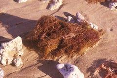 Sea Grass and Rocks On The Beach, Maui, Hawaii Royalty Free Stock Photography