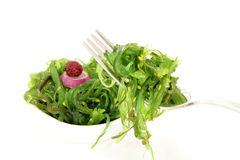 Sea grass salad Stock Photography