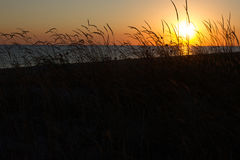 Sea and grass silhouettes in sunset Ukraine, steppe region, Kinburn spit Royalty Free Stock Images