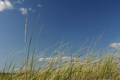 Sea Grass & Sky Stock Images