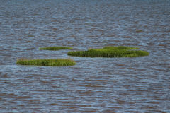 Sea grass wetlands Stock Photography