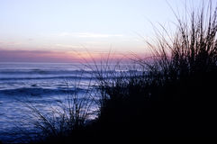 Sea Grasses. Silhouetted grasses on hill overlooking breaking ocean waves at twilight with soft pink sunset Stock Photo