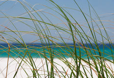 Sea Grasses stock images