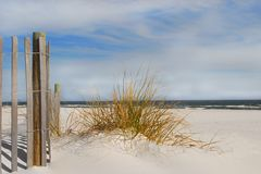 Sea Grasses on Beach Royalty Free Stock Photography