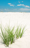 Sea Grasses on Beach Stock Images