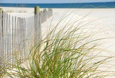 Sea Grasses by Fence Royalty Free Stock Image