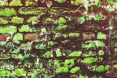 Sea green broken cracked brick wall. Moldamer, mouldbrit, moldamer, mouldbrit, mildew fungus rot moldy musty must. Dilapidated wall covered with mold and moss Stock Photos