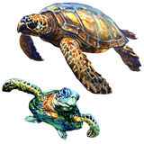 Sea green turtle isolated, set, watercolor illustration on white Stock Photos
